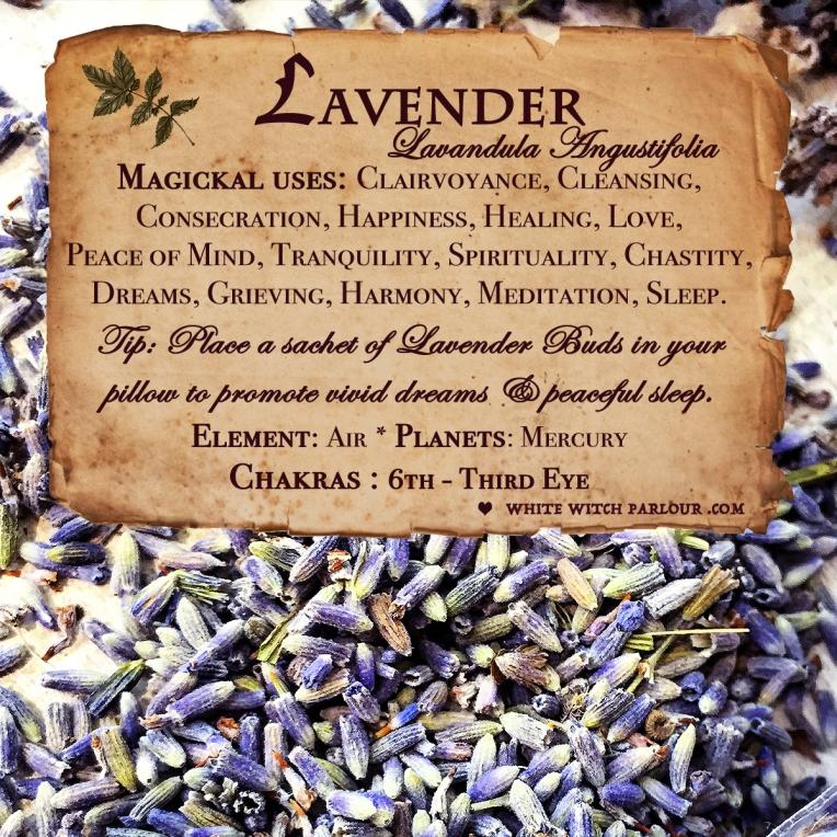 lavender herbs .jpg